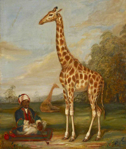 Two Giraffes With A Seated Indian Attendant In A Savannah Landscape By Jacques Laurent Agasse Art Reproduction from Wanford