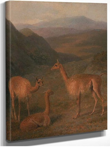 Vicunas By Jacques Laurent Agasse