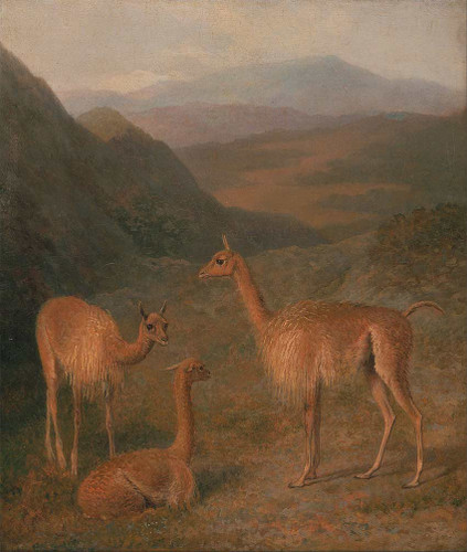 Vicunas By Jacques Laurent Agasse Art Reproduction from Wanford