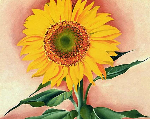 A Sunflower From Maggie By Georgia O Keeffe