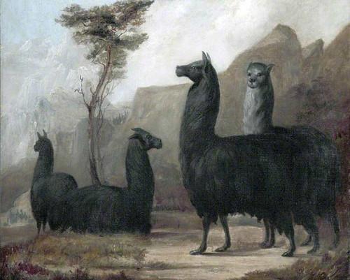 Alpacas By Jacques Laurent Agasse