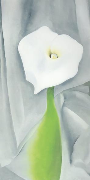 Calla Lily On Grey by Georgia O Keeffe Print