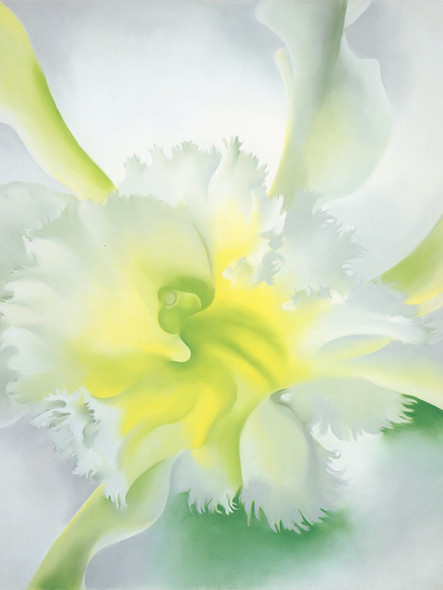 An Orchid by Georgia O Keeffe Print
