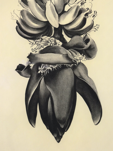 Banana Flower No 1 by Georgia O Keeffe Print