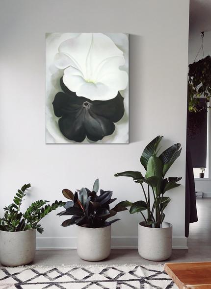 Black Petunia And White Morning Glory Ii by Georgia O Keeffe