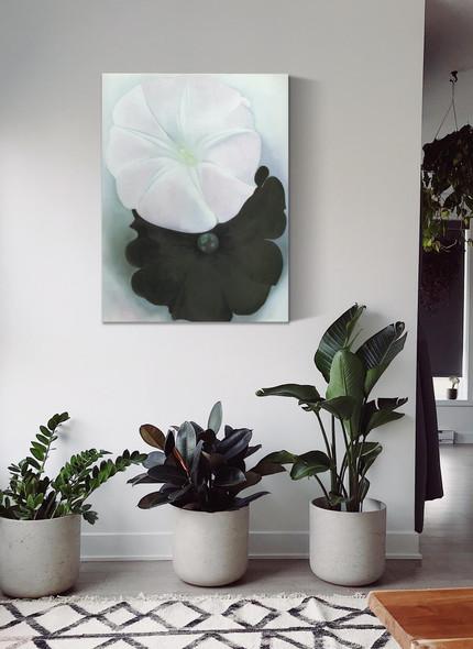 Black Petunia And White Morning Glory by Georgia O Keeffe