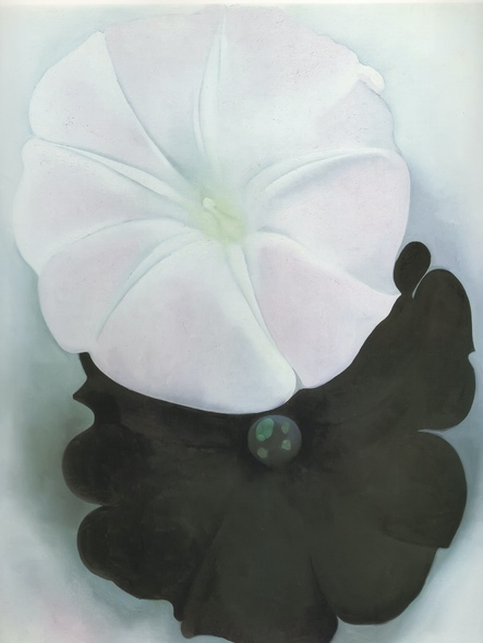 Black Petunia And White Morning Glory by Georgia O Keeffe Print