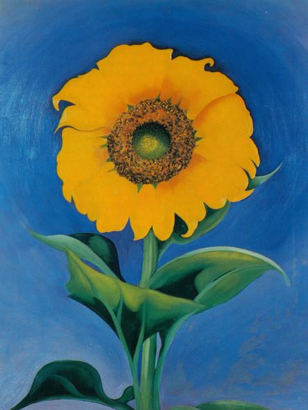 Sunflower 2 by Georgia O Keeffe Print