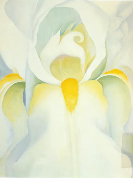 White Iris by Georgia O Keeffe Print