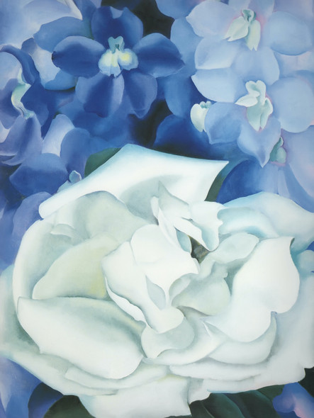 White Rose With Larkspur No 1 by Georgia O Keeffe Print