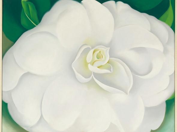 A White Camellia by Georgia O Keeffe Print