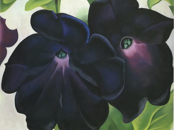 Black And Purple Petunias 1925 by Georgia O Keeffe Print