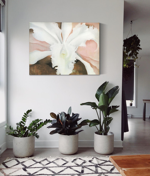Narcissas Last Orchid by Georgia O Keeffe