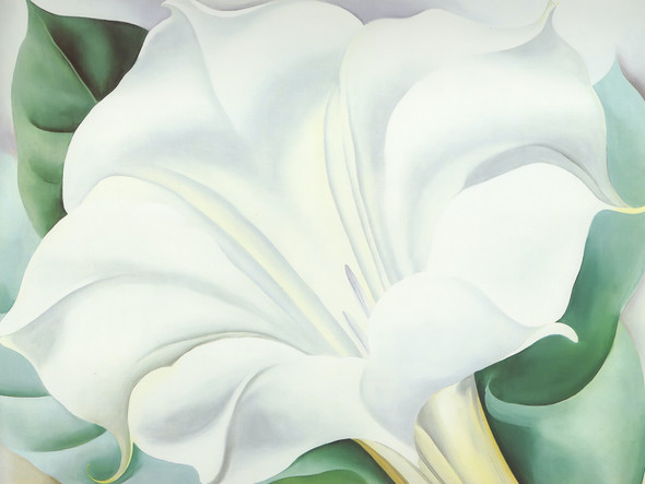 The White Trumpet Flower by Georgia O Keeffe Print