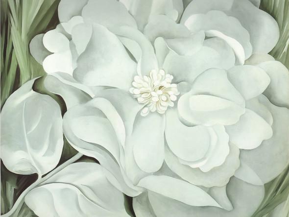 White Calico Flower by Georgia O Keeffe Print