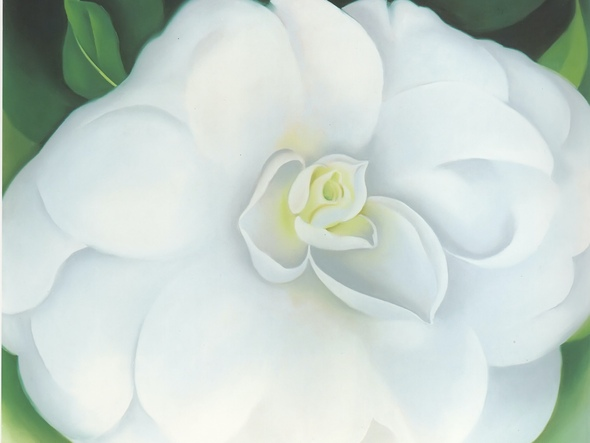 White Camellia by Georgia O Keeffe Print