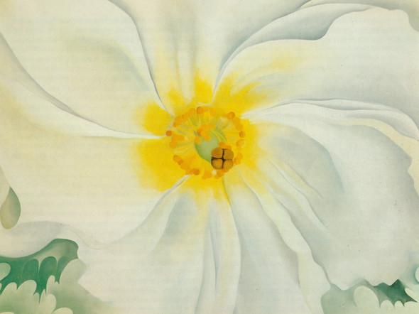 White Flower by Georgia O Keeffe Print