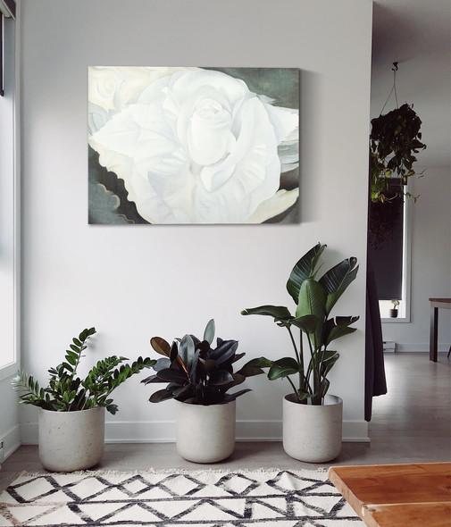 White Rose New Mexico by Georgia O Keeffe