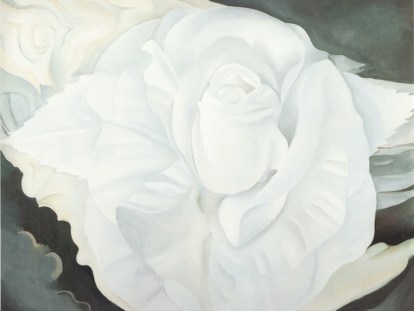 White Rose New Mexico by Georgia O Keeffe Print