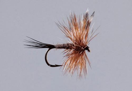 Rainy's 24/7 Trout Assortment - 36