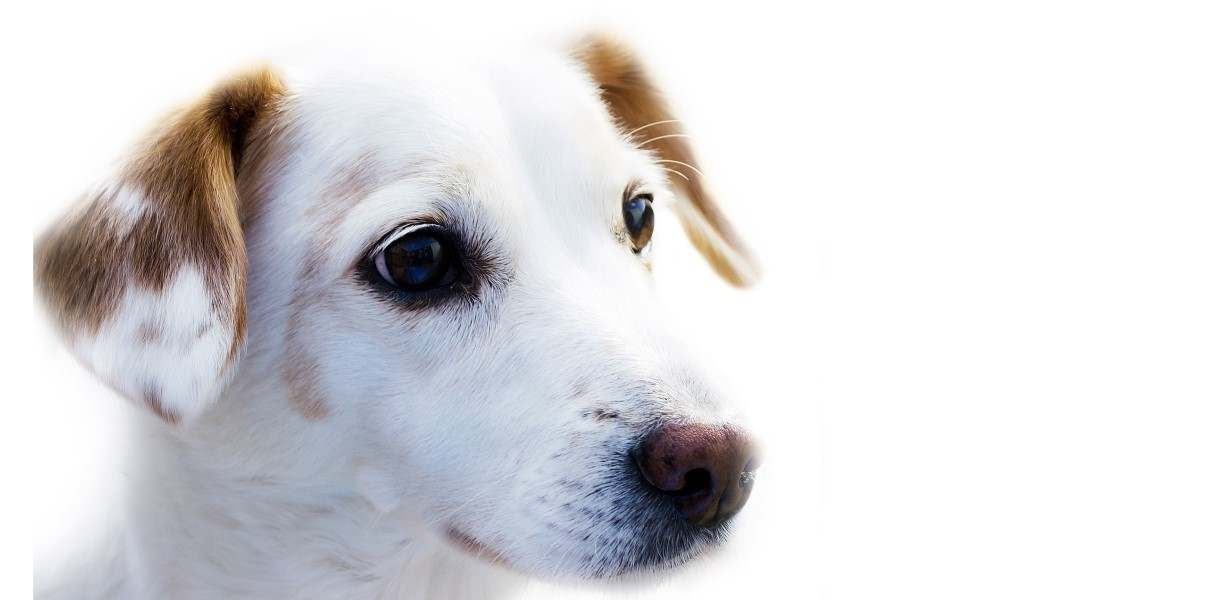 pharmacy prescription medicines for dogs