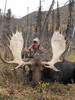 Moose from a clients hunt
