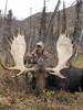 Great moose hunt at Stone Mountain Safaris