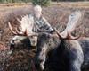 Moose hunt in BC