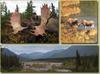 Moose - Alaska - 1161