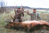 New Mexico rifle elk hunt