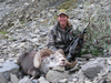 Stone Sheep hunt in British Columbia