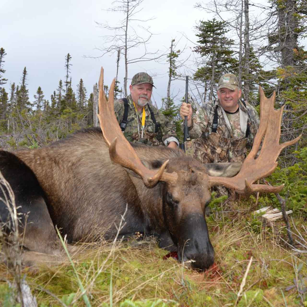 Eastern Canada Moose Hunt