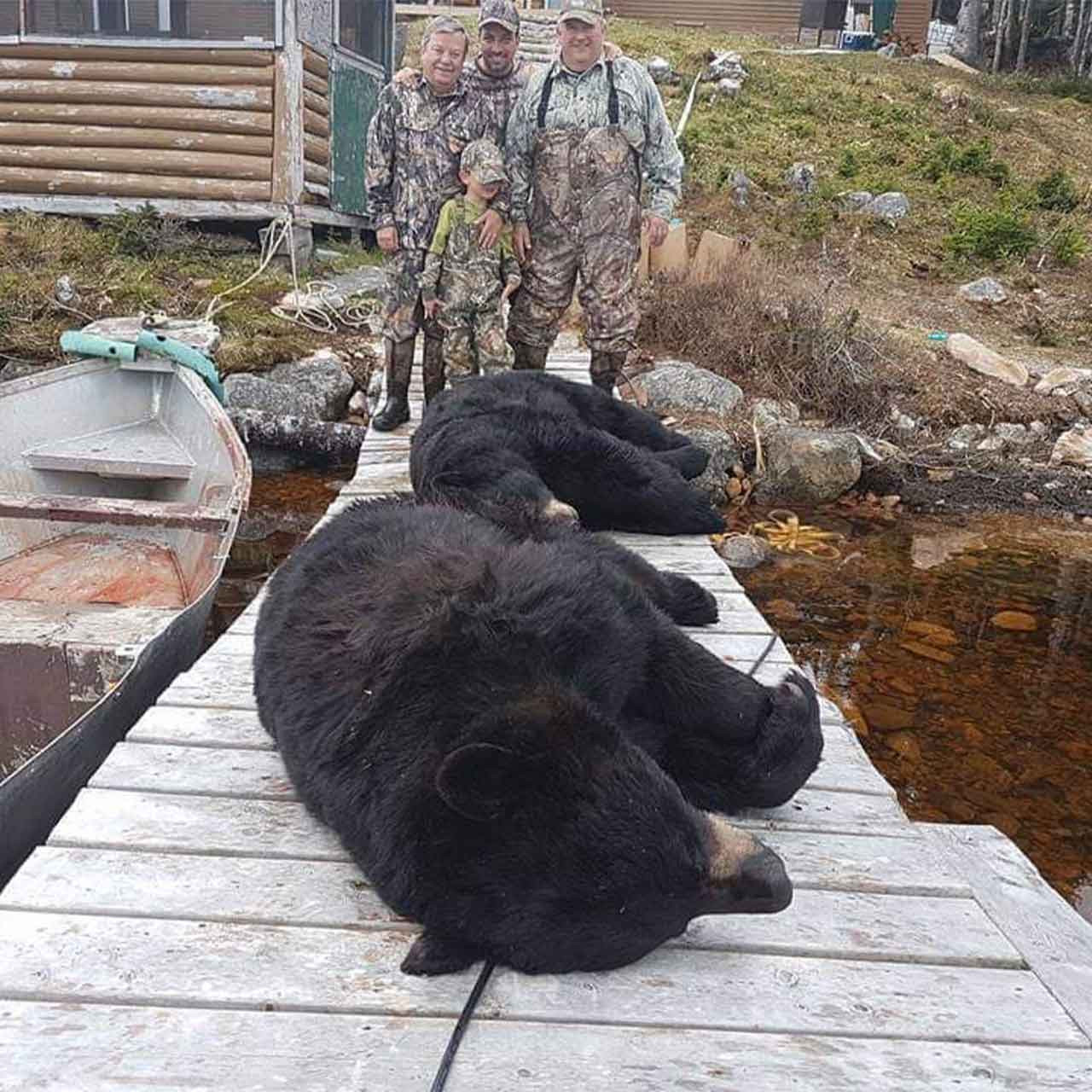 Spring Black Bear Hunt in Newfoundland
