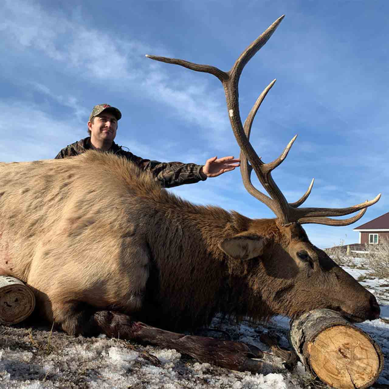 Fully guided rifle elk hunt at Anchor P Outfitters