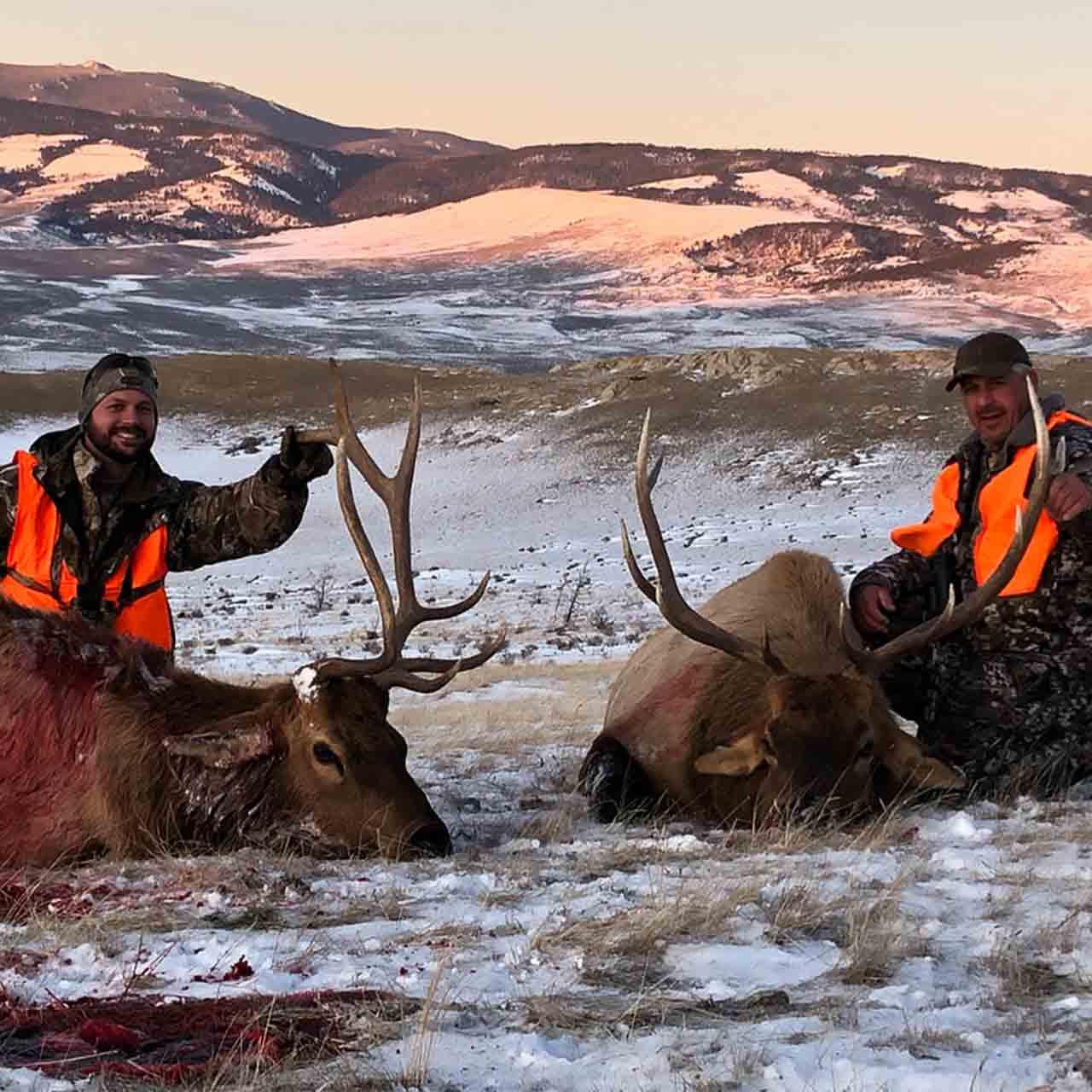 Elk hunts at Anchor P