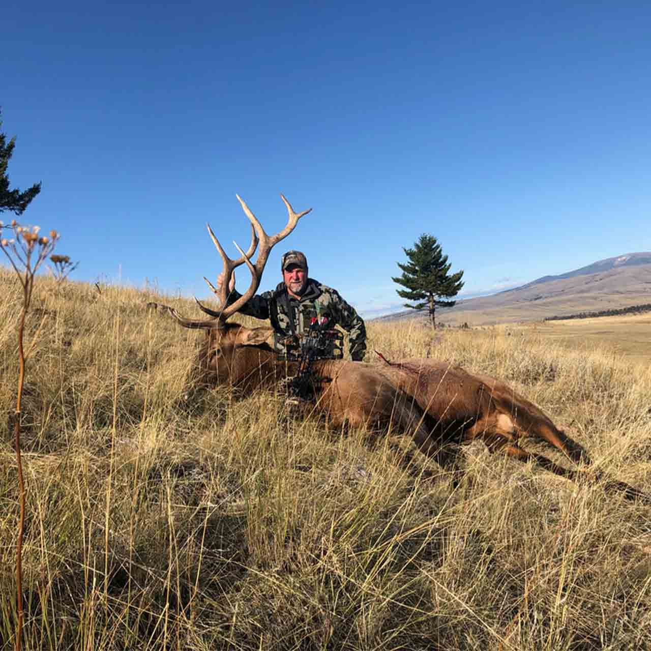 Archery elk hunt at Anchor P Outfitters