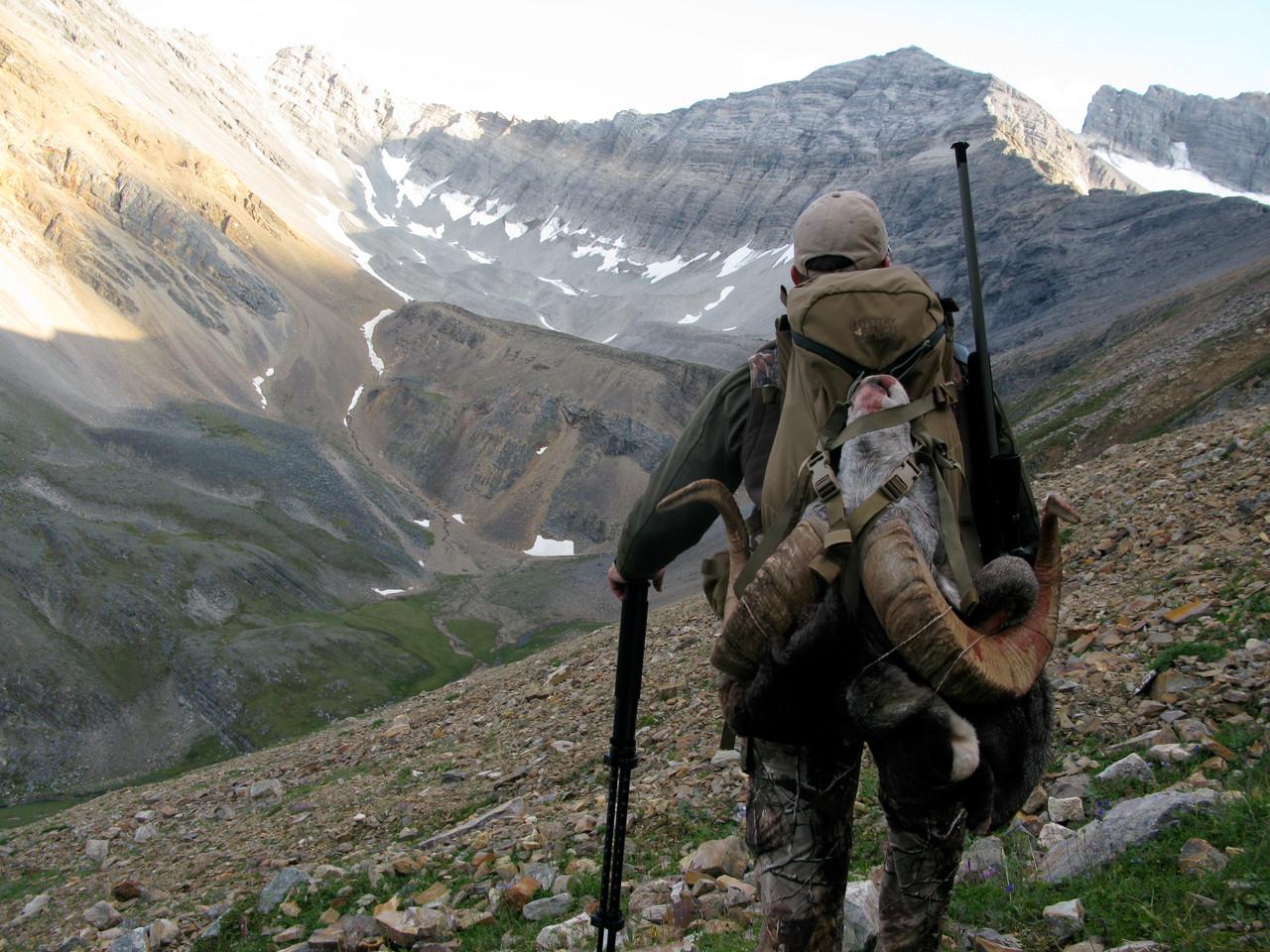 Stone Sheep - British Columbia - 1046