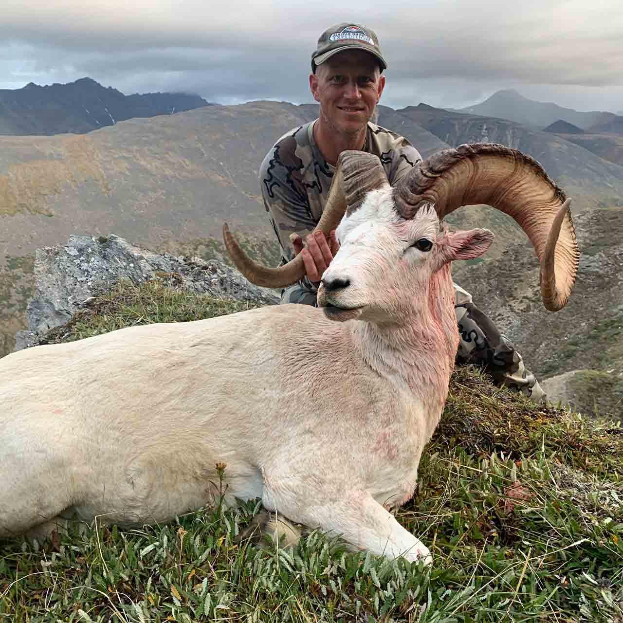 Alaska dall sheep hunt