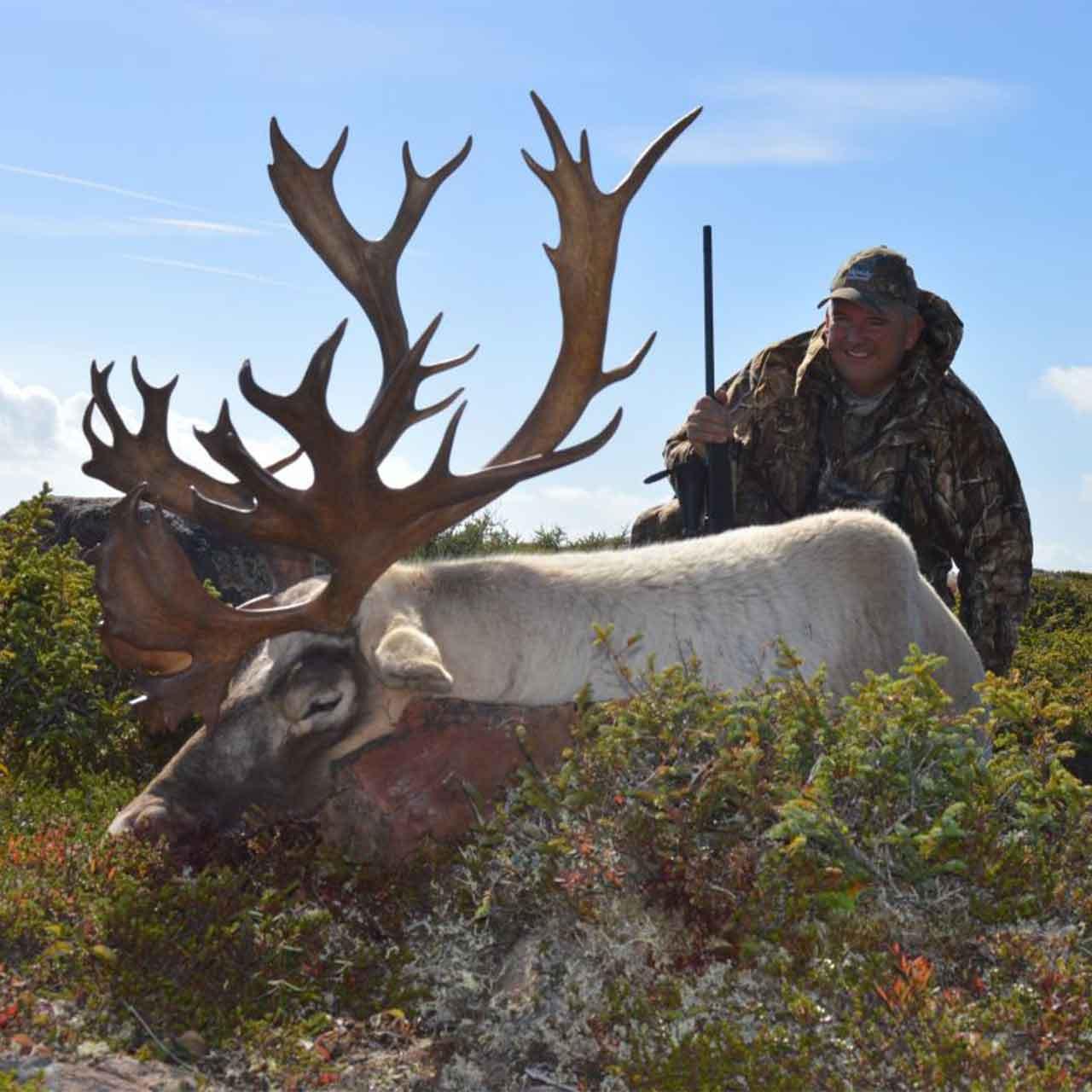 Woodland Caribou hunt in Newfoundland