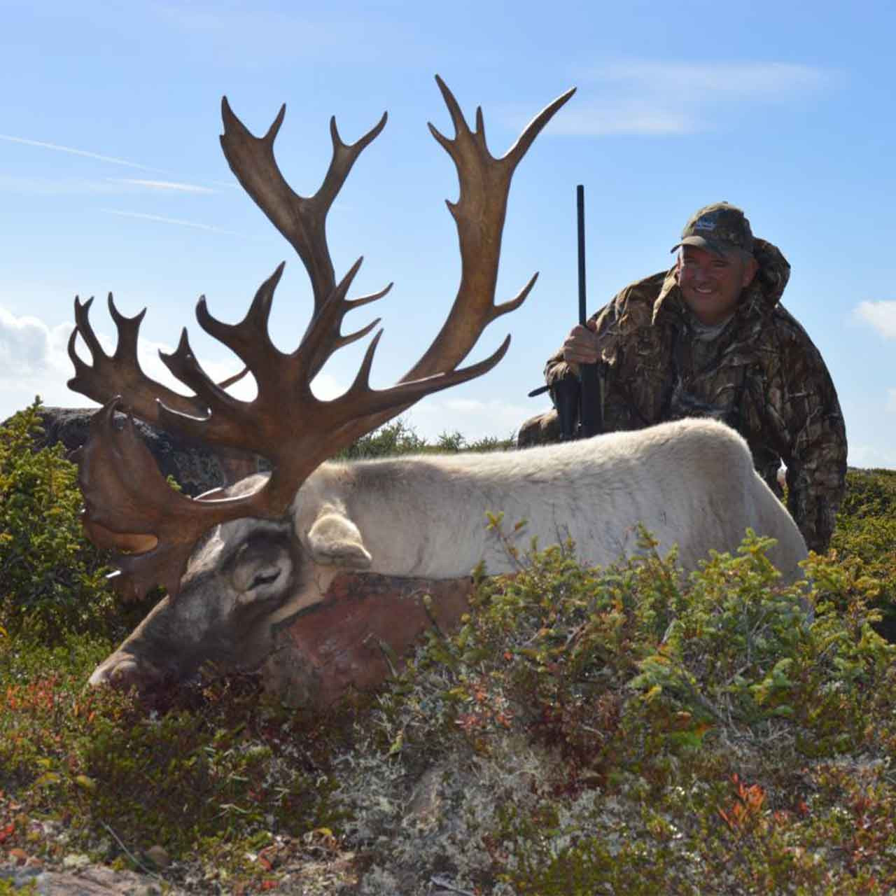 Combo hunt for moose and caribou
