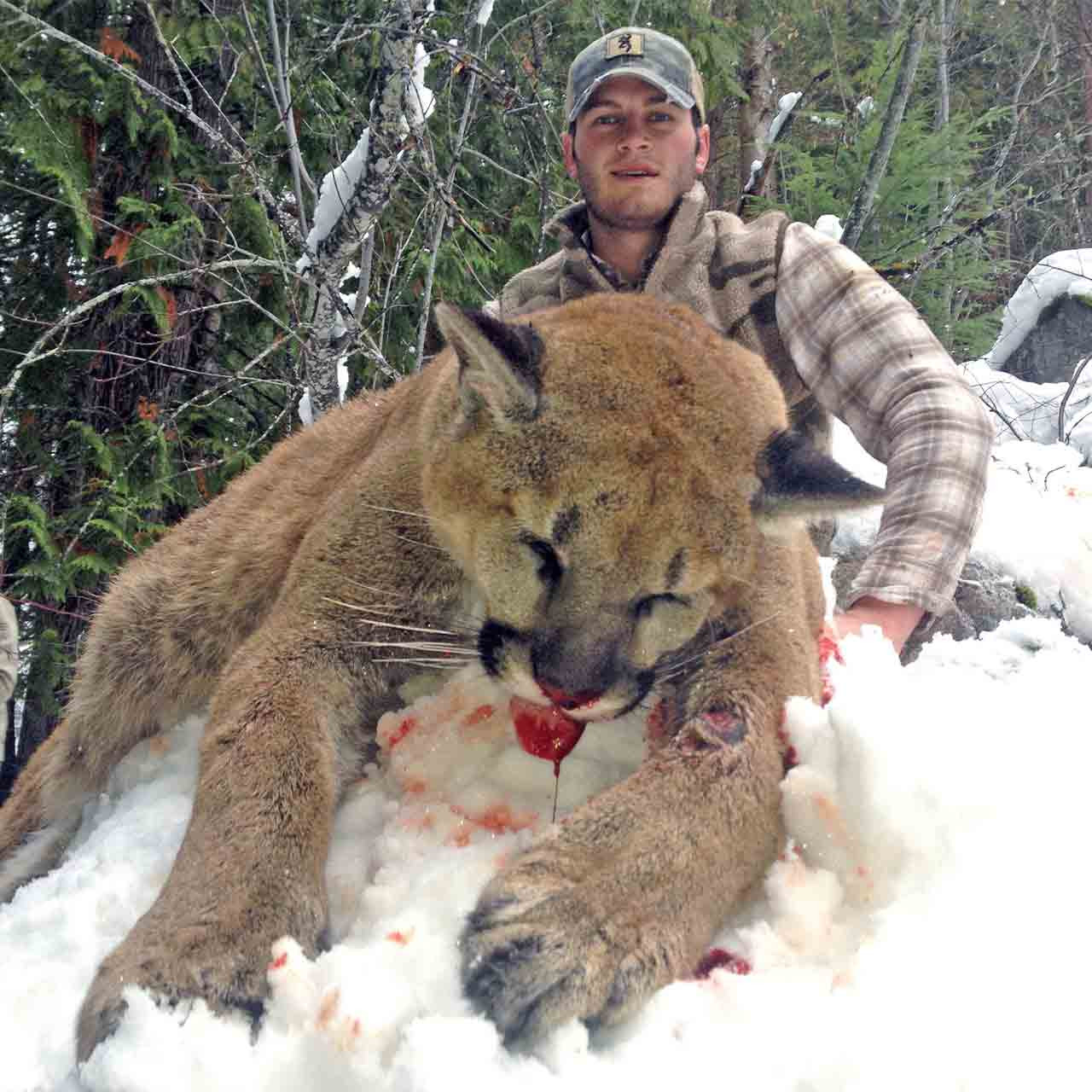 Mountain lion hunt in British Columbia