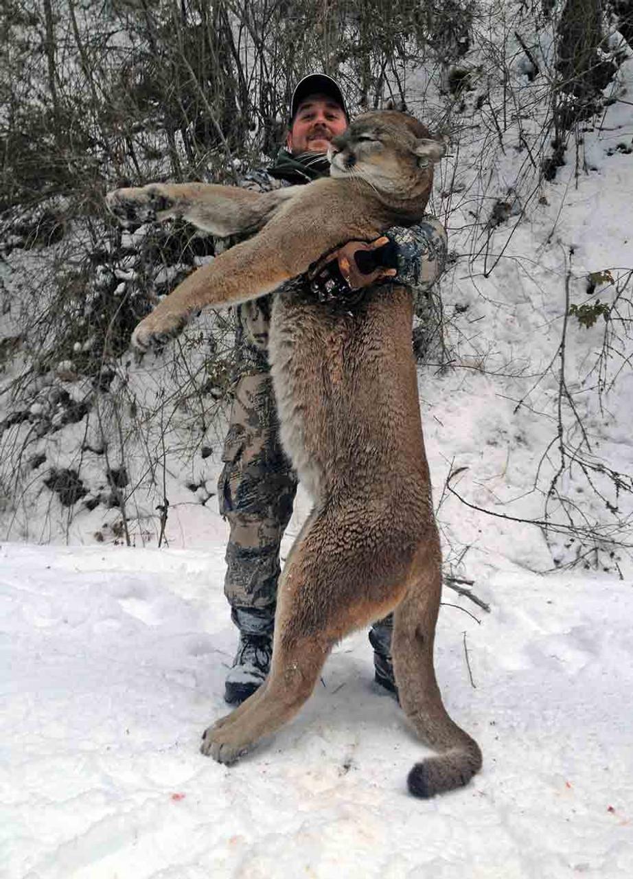 Mountain lion hunts in British Columbia