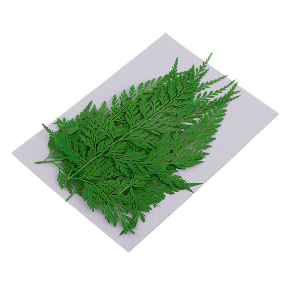 24x Real Pressed Leaves Natural Organic Dried Flowers DIY Arts Floral Decors