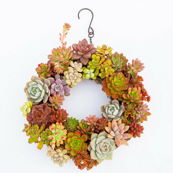 Iron Wire Wreath Ring+Heart Succulent Pot Metal Hanging Planter Plant Holder