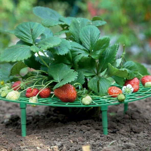 1Pcs Strawberry Holder Supports Keeping Fruit Elevated To Avoid Ground Rot