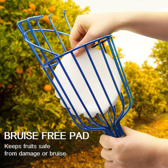 Fruit Picker Basket Twists Into Standard US Threaded Extension Pole Fruit H