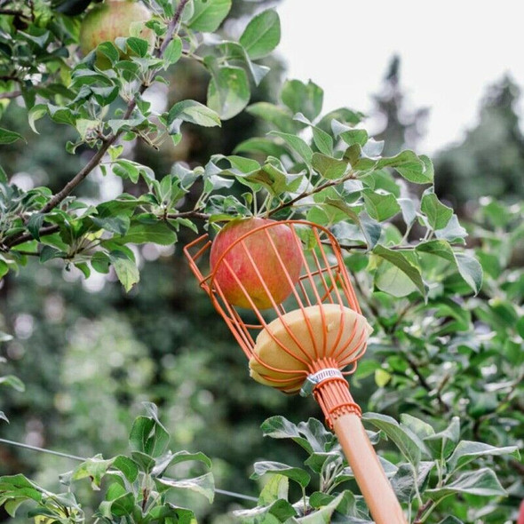 Fruit Picker Wire Picker Convenient Fruit Picker Gardening Peach Picking To