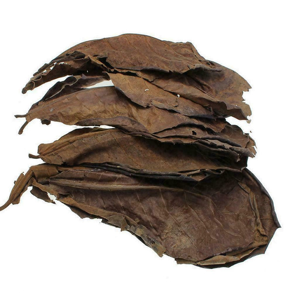 10pcs Catappa almond leaves ketapang leaf shrimp betta aquarium 2019 fish c M0F7