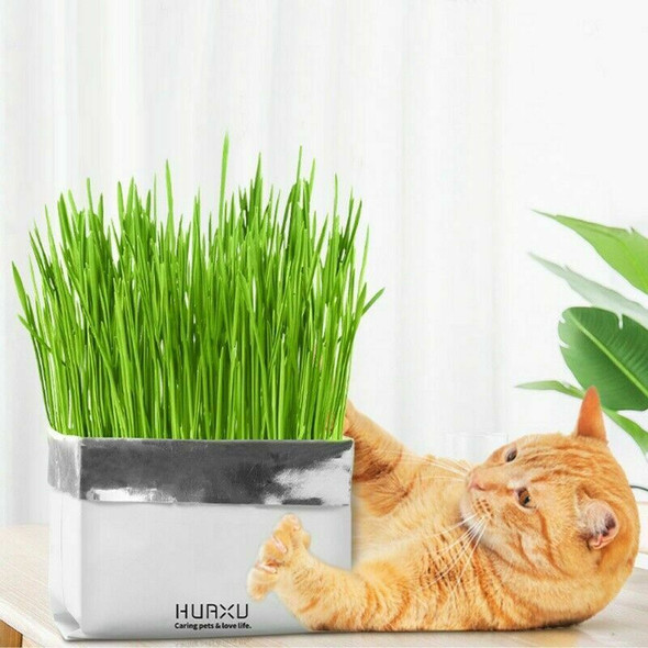 Pet Cat Grass Soilless Culture Growing Kit Cats Stomach Control Planter Hai B4Y5