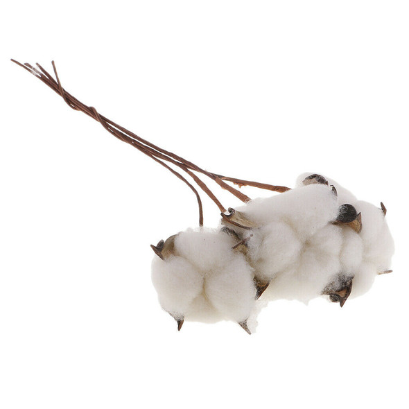 "5Pc 12"" Dried Flowers Natural Cotton Stems for Home Wedding Party Decoration"